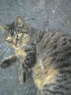 勝林寺の猫