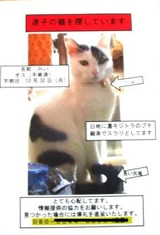 迷い猫のチラシがポスティングされる