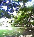 04-06-20_15-52.jpg