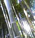 04-06-20_15-56.jpg